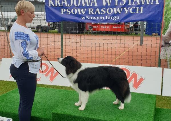 Pies na podium